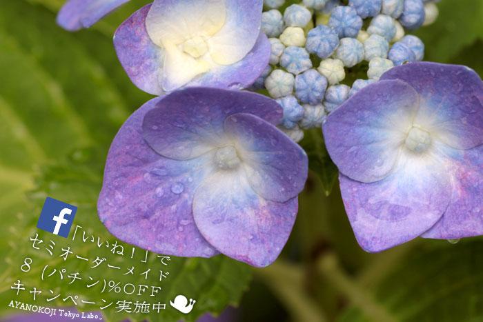 梅雨のセミオーダー祭開催中!